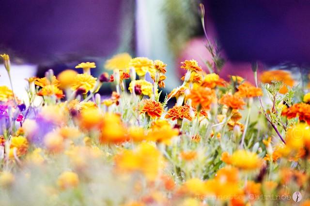 1 Click Semanal | Reto 1 | Tema: Flores .... ARCOIRIS