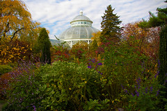 Walk In New York - Bronx - The New York Botanical Garden - the Enid A. Haupt Conservatory 3 (op_perrin) Tags: nyc newyork automne pentax bronx k100d thenewyorkbotanicalgarden theenidahauptconservatory