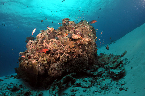 May 2010, Okinawa Kerama Diving