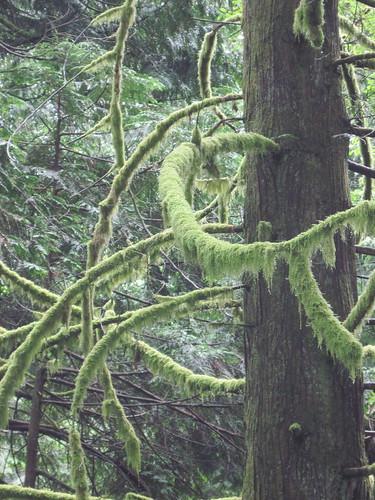 Lush Moss