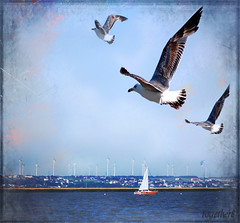 ~ Seagulls ~ Neusiedlersee ~ Austria ~ (together8) Tags: seascape texture nature austria gull vision burgenland mve theworldwelivein innamoramento nikond40 memoriesbook betterthangood neusiedersee together8 artistictreasurechest imagesforthelittleprince sailsevenseas agorathefineartgallery