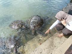 P1040769 (raafjes) Tags: bali turtleisland pulauserangan