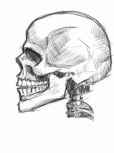 skull study with iPad - 1