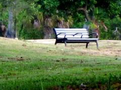 Dreher  Park Bench (I Love Elizabeth Warren - LarryJay99 ) Tags: park bench seat westpalmbeach seats sd1300 benchdreherparkpark