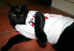 jules says... we're gonna score one more than you... (buffarches) Tags: black cat lucky imscared ohbollocks comeonengland