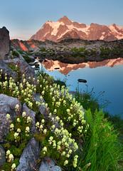 Cascade Summer (Michael Bollino) Tags: flowers summer mountains nature washington heather meadow places cascades northcascades shuksan flickrdiamond