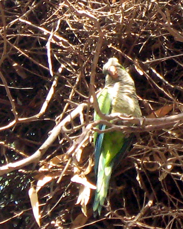 19-06-2010-parrot