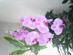belissima nilgazzola (nilgazzola) Tags: de foto ou com tirada maquina nilgazzola