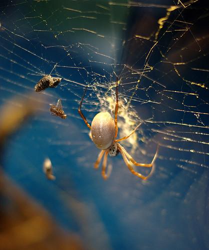 Yucky Spider