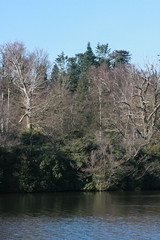 Graphics and back to Vriginia Water 113 (bunrotha) Tags: tree virginiawater