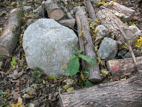 Still life with rocks and logs