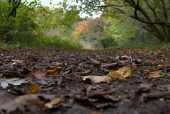 Woodland Path (~Helen Cat) Tags: trees sky brown green nature leaves woodland path dam branches ground hidden twigs pathway abbeystead