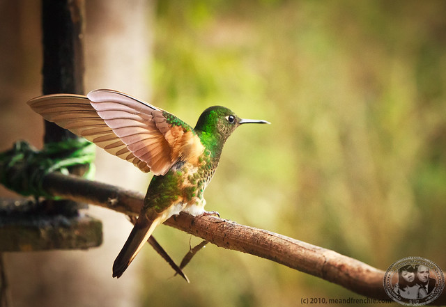 Hummingbirds Are The Only Type Of Birds That Can Fly Backwards