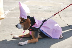Damsel (thoth1618) Tags: nyc newyorkcity costumes dog pet pets ny newyork halloween animal animals brooklyn costume october brooklynheights brooklynheightspromenade parade promenade gothamist halloweenparade 2010 howloween brooklynpromenade brooklynny dogparade dogcostumes dogcostume dogincostume brooklynusa muttsquerade petsincostume dogincostumes brooklynheightsblog 103010 petincostume animalsincostumes animalincostume halloween2010 october302010 perfectpawsinc the8thannualhowloweenmuttsqueradeparade