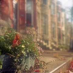 (patrickjoust) Tags: park city autumn red usa house color fall 120 6x6 tlr film home leaves yellow analog rolleiflex america square lens gold us leaf reflex haze md focus mechanical kodak united w north patrick twin maryland row baltimore negative v quotes epson medium format 100 states manual 500 hazy 80 joust f28 hampden inspiring wyman rowhouse motivational planar schneider rowhome kreuznach estados 80mm ektar c41 unidos 28c franke v500 xenotar platitude autaut heidecke inspirationalquotes patrickjoust