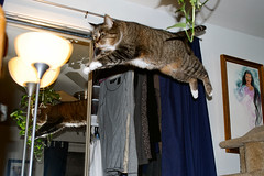 Leaping Lizards Part II (sweetp_sqrd) Tags: reflection cat catwomen jumping nikon action tabby flyingcat nikond60 cc300 cc200 cc100 bestofcats kittystormtroopers catnipaddicts friendsofzeusphoebe