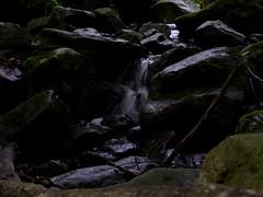 Cascade (Dendroica cerulea) Tags: waterfall stream creek brook ravine summer musconetconggorgepreserve hollandtownship hunterdoncounty nj newjersey