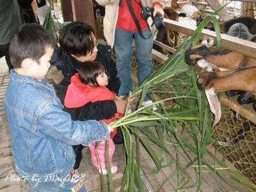 2009 12 20_16可達羊場.JPG
