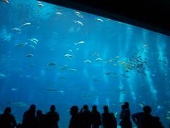 (THE_DUDE771) Tags: atlanta windows people fish water statue coral georgia aquarium hotel shark ray cola sting stupid whale crabs coca westin molestors