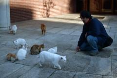 Paradise (*^_^*) (minolta X-700) (potopoto53age) Tags: cats film animal japan cat kitten paradise minolta minoltax700 voigtlander kitty vista epson agfa 90mm agfavista100 yamanashi kofu x700 closefocus f35 apolanthar flickrestrellas epsongtx970 gtx970 voigtlanderapolanthar90mmf35slclosefocus catsandme