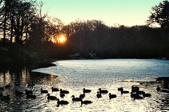 (edwards_omatic) Tags: trees winter sunset snow film water 35mm frozen pond ducks olympus om10 wirral merseyside