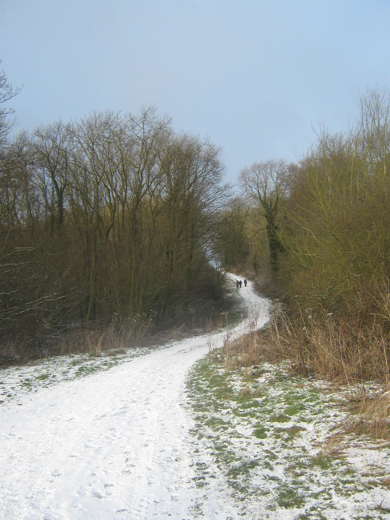 Bratt Wood, Yorkshire Wolds Way/Wilberforce Way near Nunburnholme, East Riding, East Yorkshire