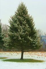 (Tim Loesch) Tags: snow tree baldpate