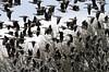Panic (Team Hymas) Tags: geese wildlife panic refuge duane tms pandemonium ridgefield tellmeastory