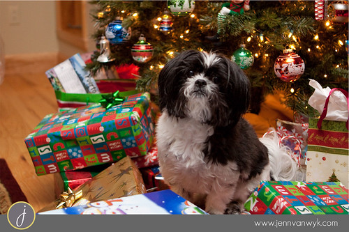 Ready to Open Presents!