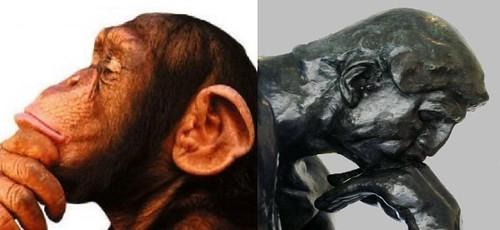 macaco e homem, pensando