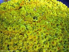 Mysore - Devaraja market (dietmut) Tags: travel flowers india tourism reisen asia journey karnataka mysore bloemen reizen yelloworange azië gelborange federalstate panasoniclumix devarajamarket dmcfx500 dietmut deelstaat yourfavorites23 geelyellowgelb oranjeorangeorange