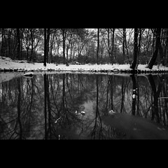 (hans jesus wurst) Tags: park winter sea blackandwhite bw snow reflection berlin ice photoshop reflections germany frozen border usm unsharpmask tiergarten merged brenches blackandwhiteconversion minimalprocessing nohdr 2exposures canoneos400d cokinnd8 slightvignette sigma1020mm1456dchsm hansjesuswurst moritzhaase