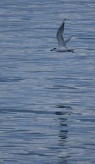 Turn (tkmckinn) Tags: birds australia july09