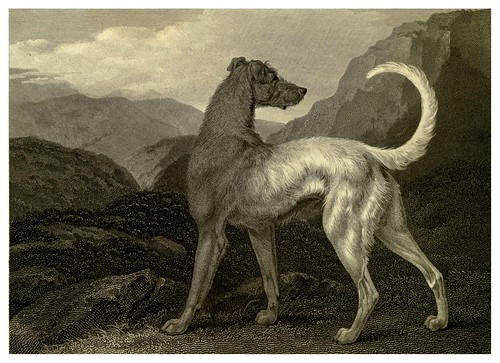 022-Galgo irlandes-The sportsman's repository 1845- John Scott