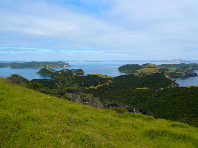 Looking out on the Bay of Islands
