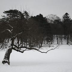 (toeytoeytoeytoeytoey) Tags: park winter snow nature gteborg europe sweden gothenburg