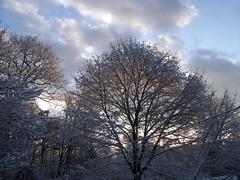 Snow_12010c