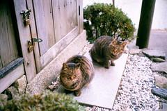 Nippon | 冬,嵐山 (Kerb 汪) Tags: film japan cat kyoto 京都 nippon 嵐山 kerb 貓 konicac35ef konicacenturia200 24數碼服務 konicac35film015 數碼3742 kerbwang