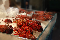 Fresh Lobsters (Daina Falk Art and Photography) Tags: red ice japan fishing bright market live storefront seafood lobsters sell onsale crustaceans