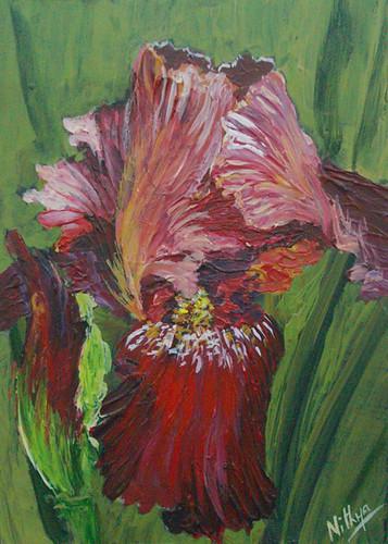 Copper Iris