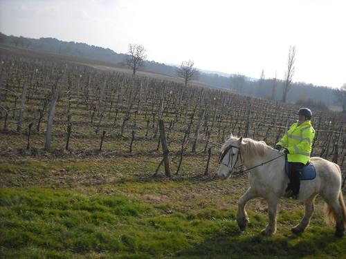Ballade pour Equine Rescue 4353459627_e507214bdd