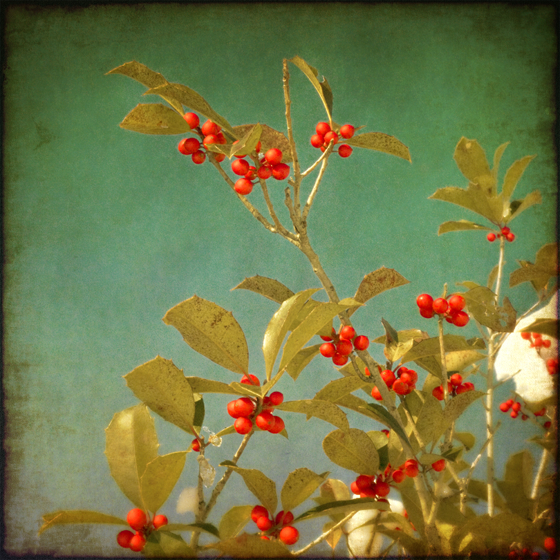 Holly with Texture