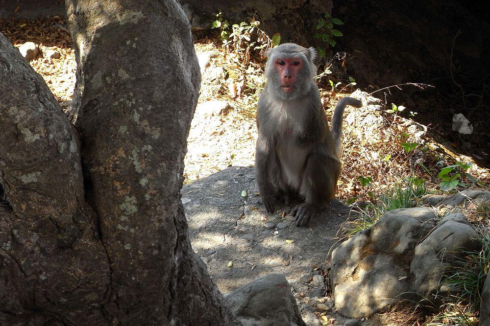 35 猴.jpg