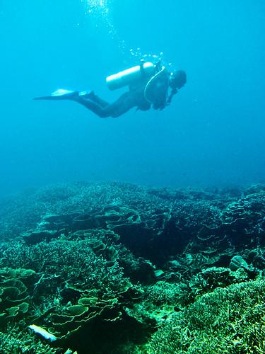 Flores Underwater 07