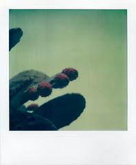 Ojai Cactus 2