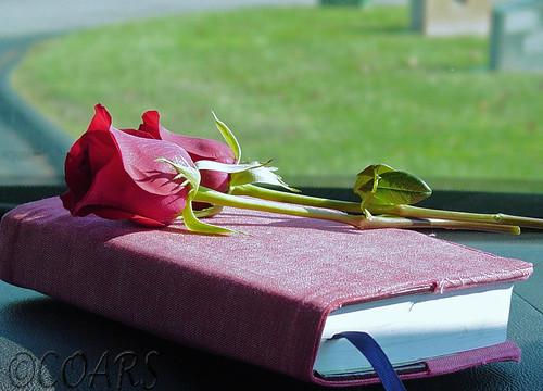 Roses & Bible @WM