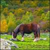 Peace (Pilar Azaña Talán ) Tags: españa pirineos sauthdethpish valledearán mywinners abigfave 100commentgroup pilarazaña virgiliocompanyspecialaward