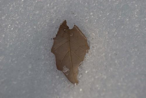 sinking leaf