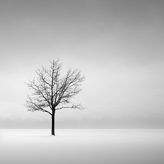 Solitude (Jeff Gaydash) Tags: trees blackandwhite snow tree square landscape zen minimalism px3 artifakts