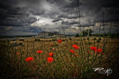 Papaveri (PiusKo) Tags: red cloud clouds cloudy poppies papaveri mygearandmepremium mygearandmebronze mygearandmesilver mygearandmegold flickrstruereflection1 flickrstruereflection2 flickrstruereflection3 flickrstruereflection4 flickrstruereflection5 4timesasnice 5timesasnice